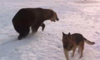Граючий з собакою ведмідь став зіркою youtube