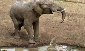 Слоненя проплакав 5 годин через розлуки з матір`ю