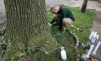 Ін`єкції деревах, як захист від хвороб і комах-шкідників