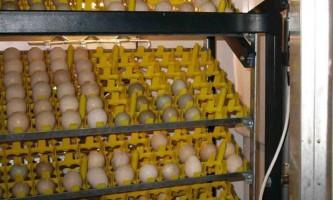 Інкубація яєць сільськогосподарської птиці