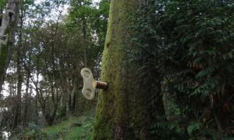 Інсталяція `` заводний ліс `` (the clockwork forest)
