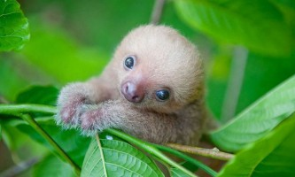Інститут лінивців (the sloth institute)