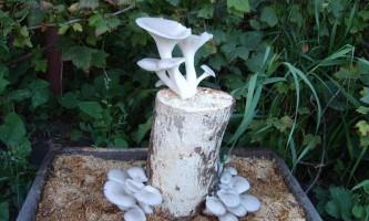 Інструкція як стати дачником-грибівників