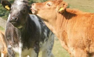 Цікаві факти зі світу тварин
