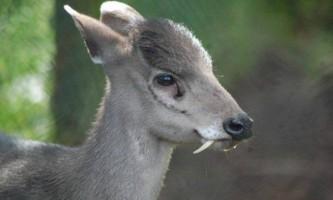 Цікаві факти про запашних речовинах тварин, що використовують в парфумерії