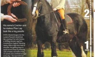 Найбільші коні в світі