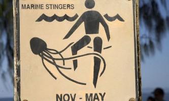 У водах східної австралії зареєстровано величезну кількість медуз