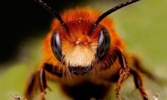 Цікаві факти про комах і тварин