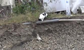 Інтернет-користувачі захоплені котячим героїзмом