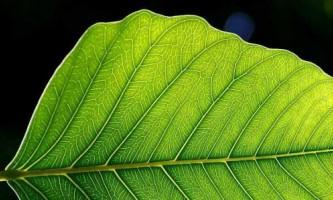 Штучні листя в боротьбі за відновлювану енергію