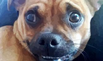 Всупереч широко поширеній думці, зір у собак не чорно-біле