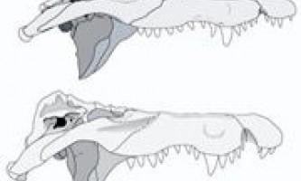 """Досліджено стародавні останки """"крокодила, який пожирає людей"""""""
