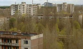 Дослідники вивчили чорнобильські дерева-мутанти, що змінюють колір і форму