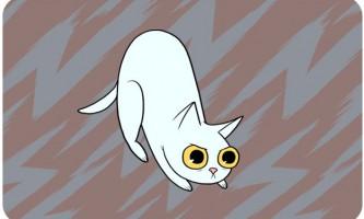 Справжній сенс поведінки кішок
