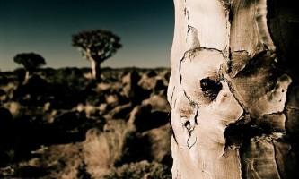 Насадження лісів слабо допоможе в боротьбі з глобальним потеплінням