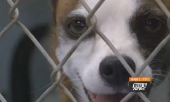 Історія собаки, яка знайшла новий будинок після 10 років в притулку