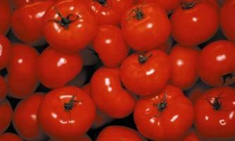 З історії томатів