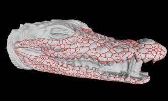Зоологи знайшли пояснення страхітливими малюнку на морді крокодилів