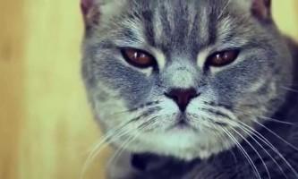 Як відучити кота мітити територію в квартирі