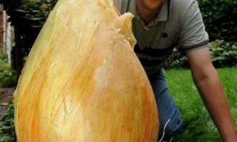 Вага найважчою в світі цибулини склав 8,5 кілограма
