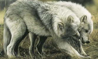 Я народилася з любов`ю до тварин. Пастельна живопис леслі харрісон (lesley harrison)