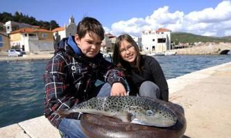 Отруйну рибу фугу виловили в адріатичному морі