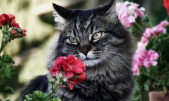 Отруйні рослини для кішок і небезпечні кімнатні квіти