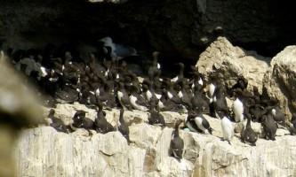 Яйця морських птахів захищені від води і солоного повітря