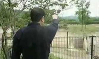 Японець навчився присипляти тварин на відстані