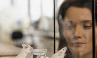 Японські вчені оживили померлу миша