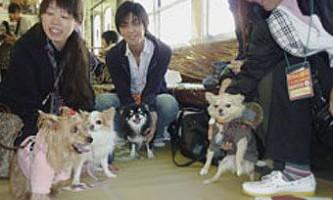Японським собакам влаштували день розваг