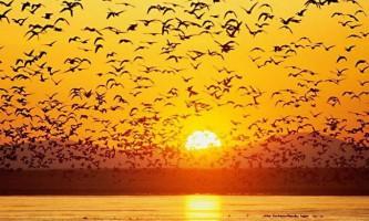 Яскравий і красивий світ птахів: хвилюючі фото