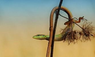 Ящірки. Фото і назви всіх видів ящірок