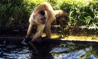 Ефект сотої мавпи