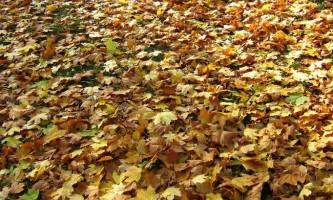 Екологічно чисті батареї можна зробити з листя