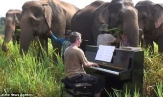 Ексцентричний британський піаніст грає на піаніно для сліпих слонів