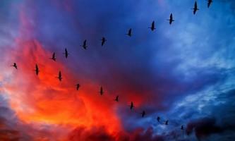 Екскременти морських птахів уповільнюють глобальне потепління
