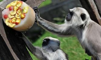 Як тварини в зоопарках рятуються від спеки