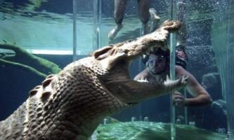 Екстремальне знайомство з гребнистой крокодилом (saltwater crocodiles)