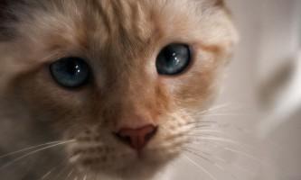 Екзекан для кішок: інструкція із застосування