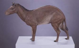 Еогіппус - викопна кінь