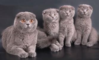 Етика заводчика - ваш орієнтир у виборі породистого кошеняти