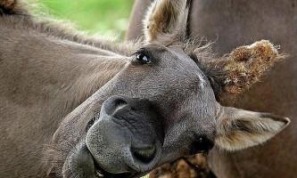 Еволюція коней підпорядковувалася змін в їх меню