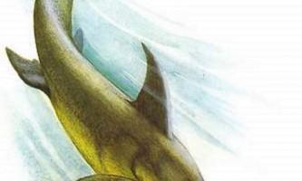 Еврінозавр - загадковий морський динозавр