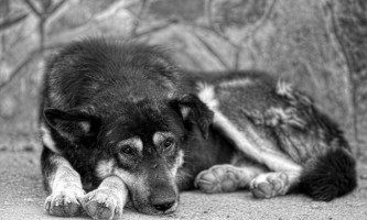 Південний округ - згубне місце для хабаровських собак