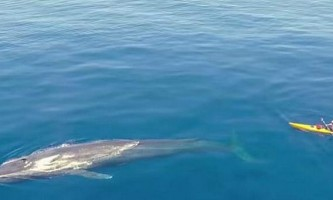 Каякер зняв відео свого спільного плавання з синім китом