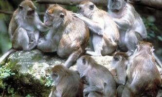 Як близькоспоріднені види організовують своє суспільство