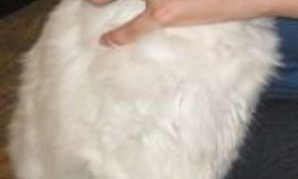 Як дати кошеняті і кішці ліки (таблетку)