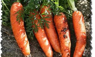 Як грамотно і ефективно посіяти моркву