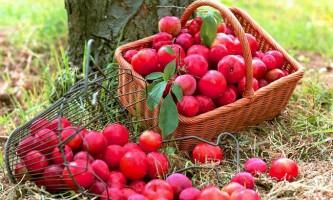 Як зберігати ягоди і плоди?